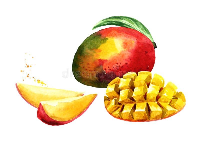 Mangofrukt med mangokuber och skivor Dragen illustration för vattenfärg som hand isoleras på vit bakgrund royaltyfri illustrationer