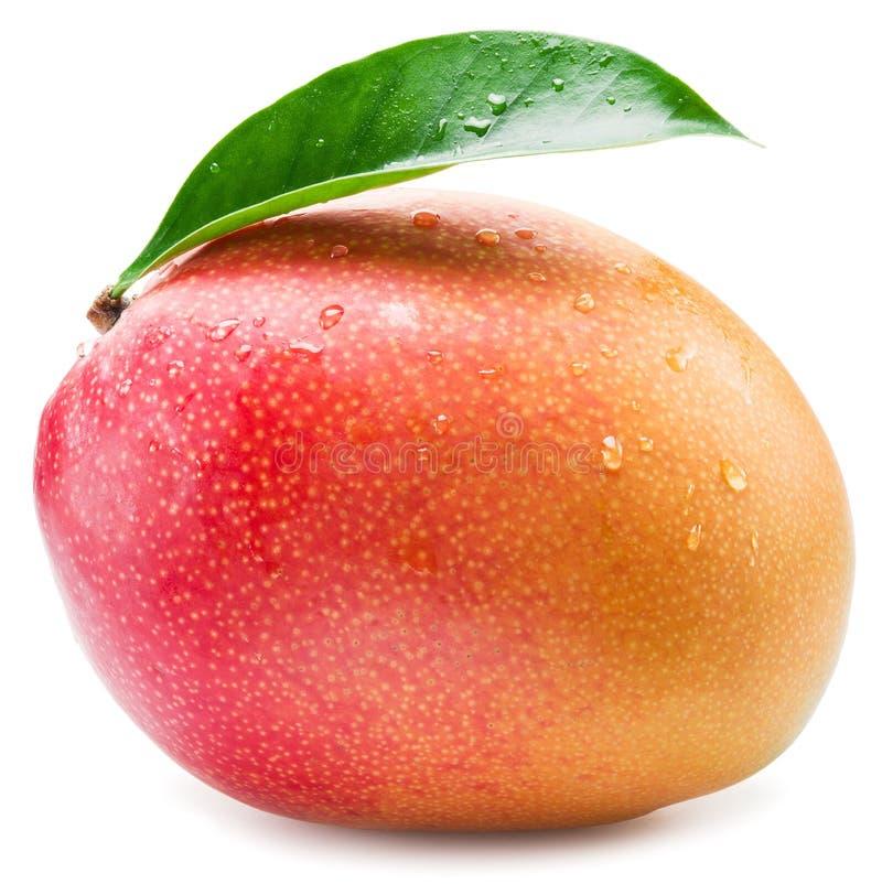 Mangofrukt med vattendroppar fotografering för bildbyråer