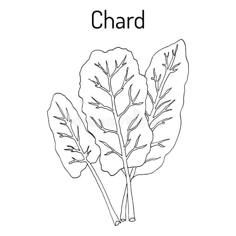 Swiss Chard Stock Illustrations 126 Swiss Chard Stock Illustrations Vectors Clipart Dreamstime