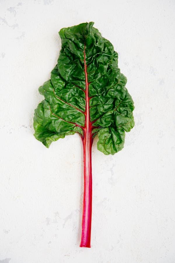 Mangoldblatt mit purpurrotem Stamm lizenzfreie stockfotografie