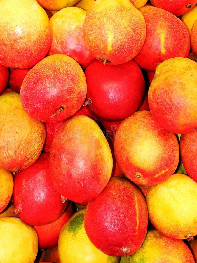 Free Mangos Royalty Free Stock Photo - 22354725