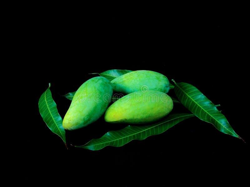Mangos frescos fotografía de archivo libre de regalías