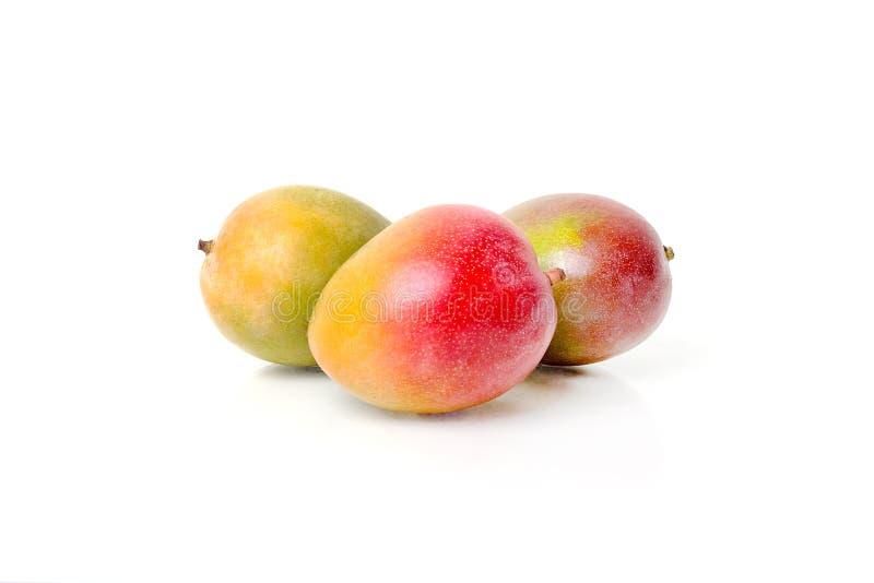 Mangos maduros imagen de archivo libre de regalías