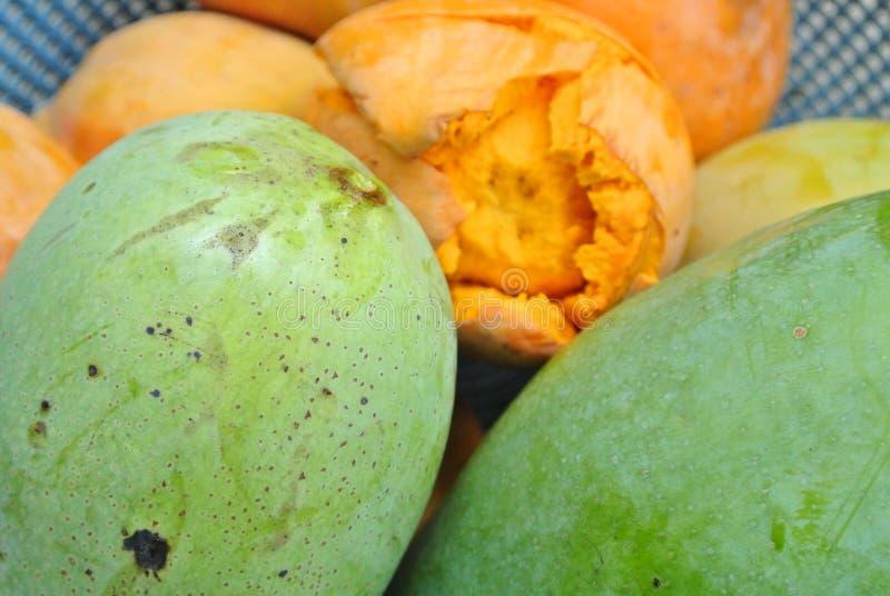 Mangospezies lizenzfreie stockbilder