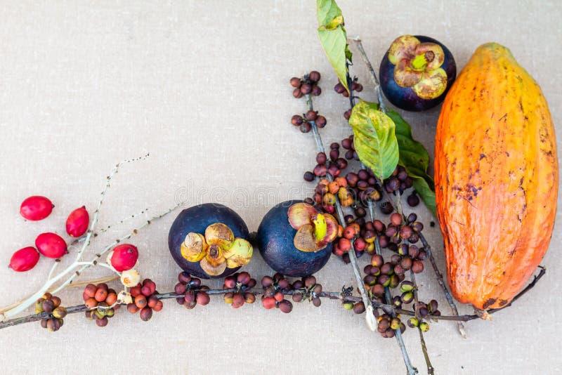 Mangostan, koffiebonen en cacaovruchten op de lijst royalty-vrije stock afbeelding