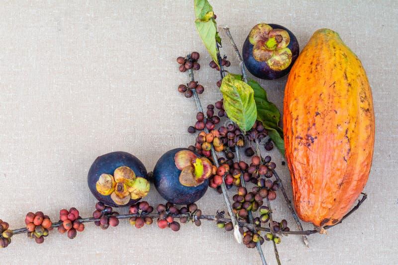 Mangostan, koffiebonen en cacaovruchten op de lijst royalty-vrije stock fotografie