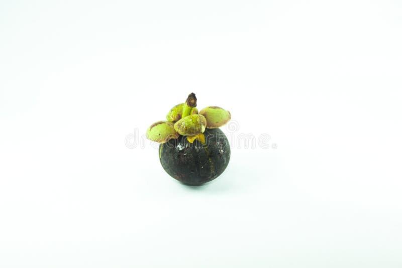 Mangostanfrucht lokalisiert auf weißem Hintergrund stockfotografie