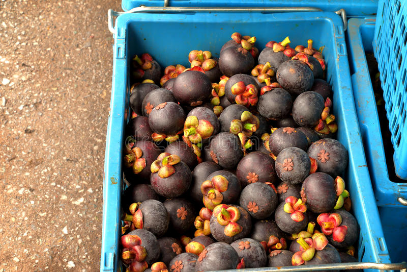 Mangostans in manden op grond bij fruitmarkt stock foto's