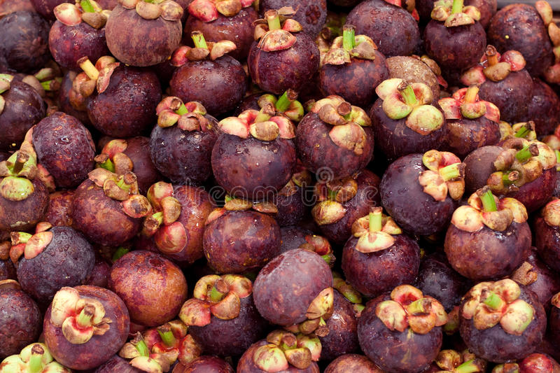 Download Mangosteen Stock Photography - Image: 25720372
