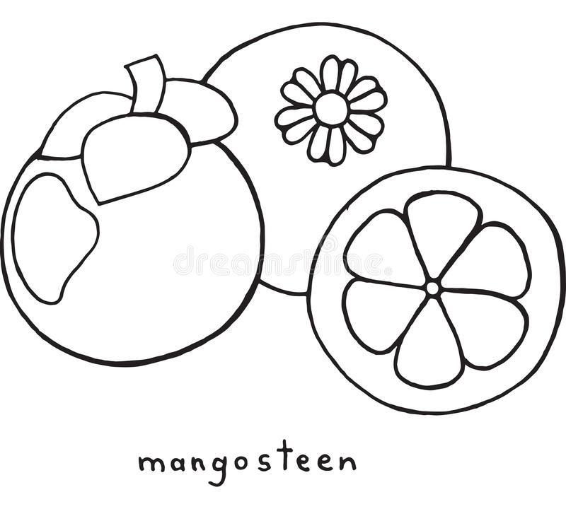 Download Mangosteen Coloring Page Graphic Vector Black And White Art For Stock