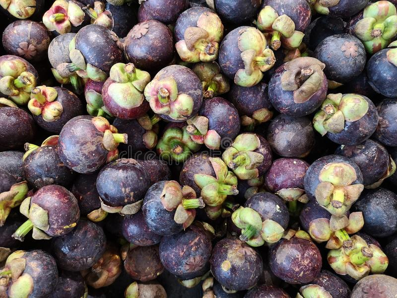 Mangosteen fruits close up and background, tropical fruits exhibition. Southeast asia fruits royalty free stock photos