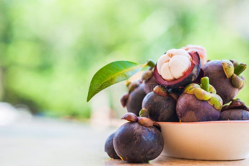 Mangosteen och tvärsnitt som visar de tjocka lilahud- och vitköttet av drottningen av friuts, läcker mangosteenfruktarra fotografering för bildbyråer