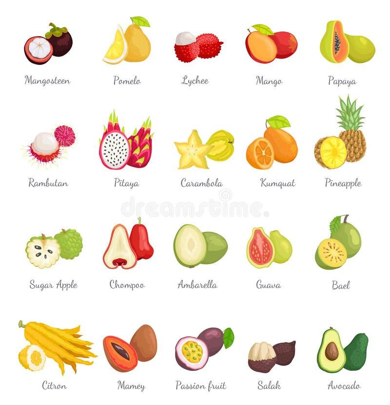 Mangosteen and Papaya Avocado Set Vector. Mangosteen and papaya avocado set of icons vector. Pineapple and pomelo, mango and rambutan, carambola and kumquat stock illustration