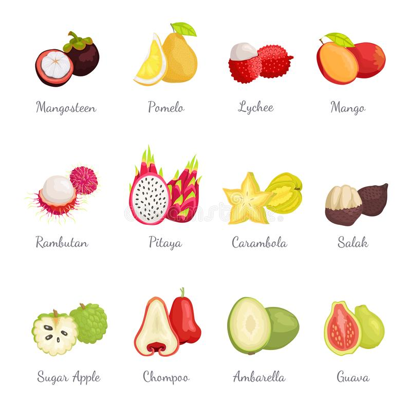 Mangosteen and Pomelo Lychee Mango Set Vector. Mangosteen and pomelo, lychee and mango set exotic tropical fruits vector. Succulent carambola sliced star stock illustration