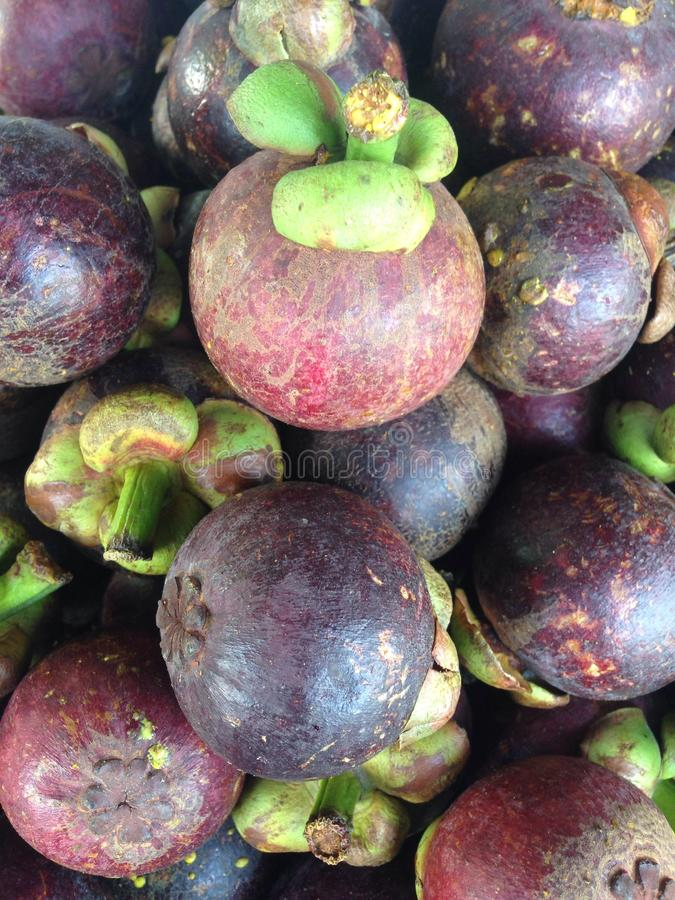 Mangosteen. The purple mangosteen (Garcinia mangostana), colloquially known simply as mangosteen, is a tropical evergreen tree believed to have originated in the stock image