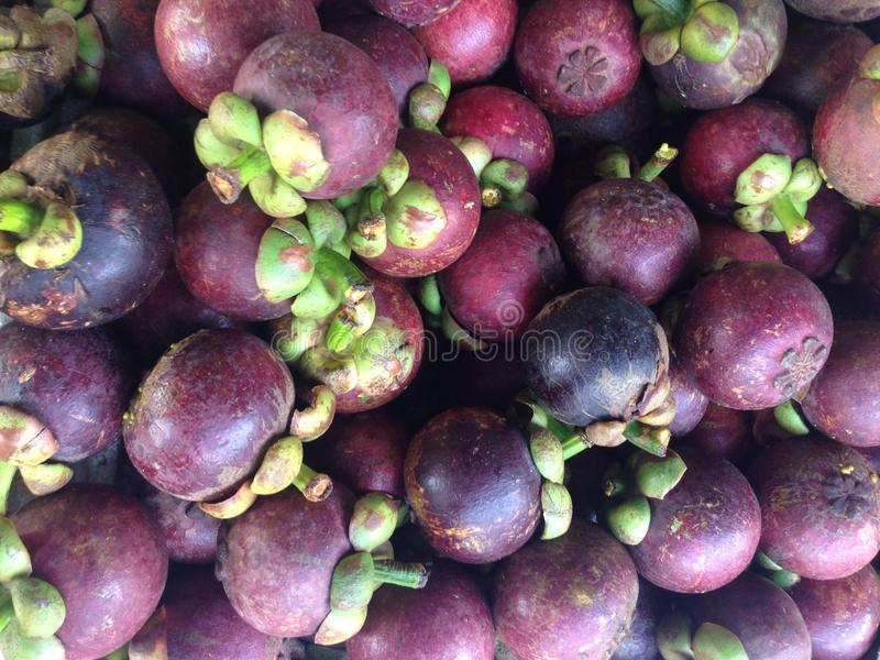 Mangosteen. The purple mangosteen (Garcinia mangostana), colloquially known simply as mangosteen, is a tropical evergreen tree believed to have originated in the royalty free stock image