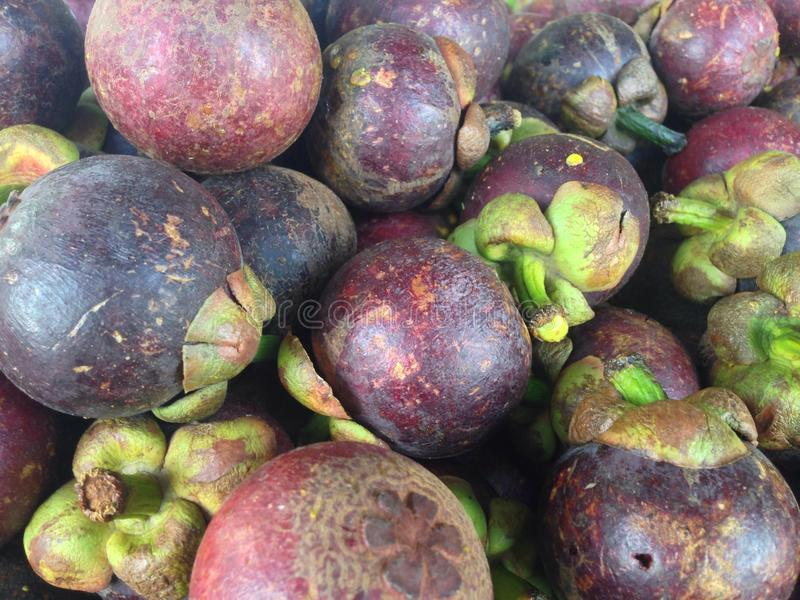 Mangosteen. The purple mangosteen (Garcinia mangostana), colloquially known simply as mangosteen, is a tropical evergreen tree believed to have originated in the royalty free stock photo