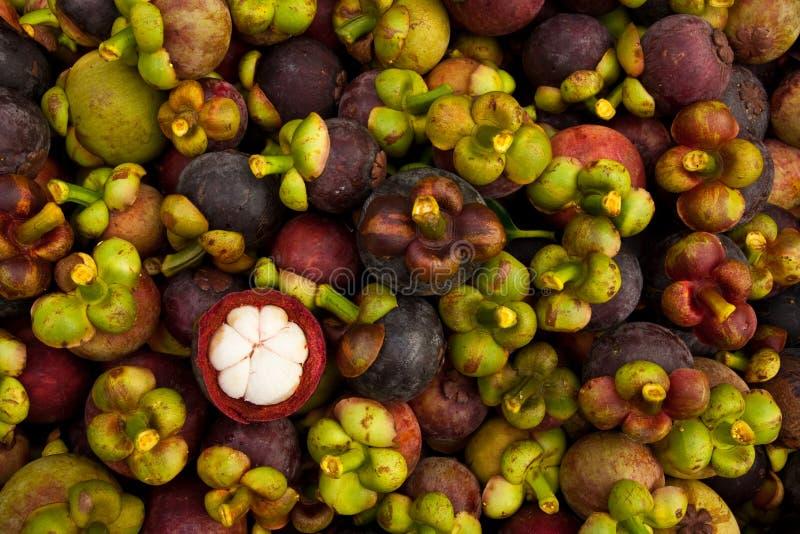 Mangosteen, queen of tropical fruit stock photos