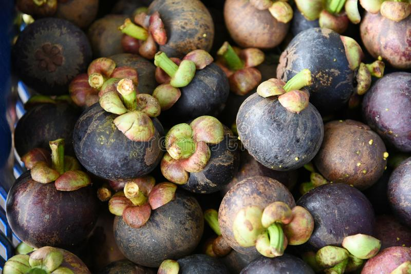 MANGOSTEEN. stock images