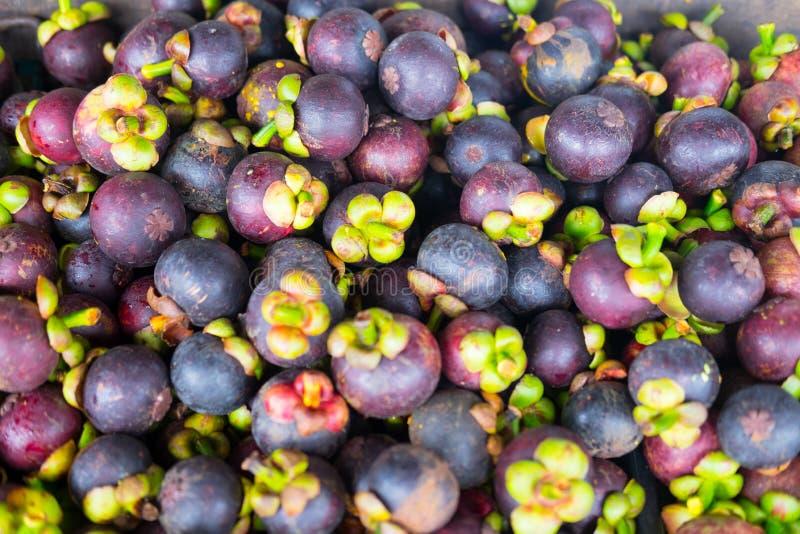 Mangosteendrottning av frukt arkivbild