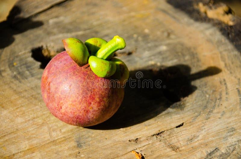Mangoustan la reine des friuts, arran délicieux de fruit de mangoustan photo libre de droits
