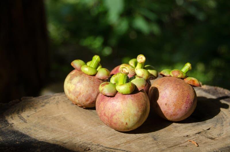 Mangoustan la reine des friuts, arran délicieux de fruit de mangoustan photographie stock