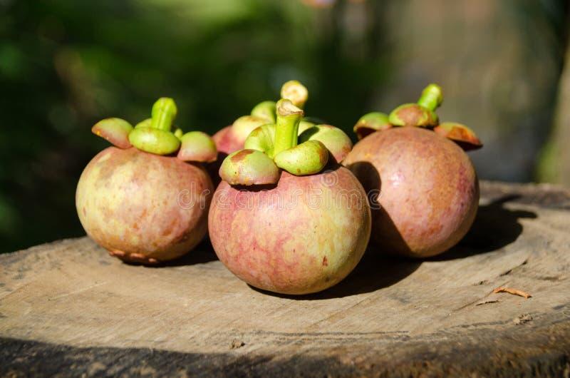 Mangoustan la reine des friuts, arran délicieux de fruit de mangoustan image stock