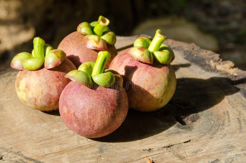Mangoustan la reine des friuts, arran délicieux de fruit de mangoustan photos stock