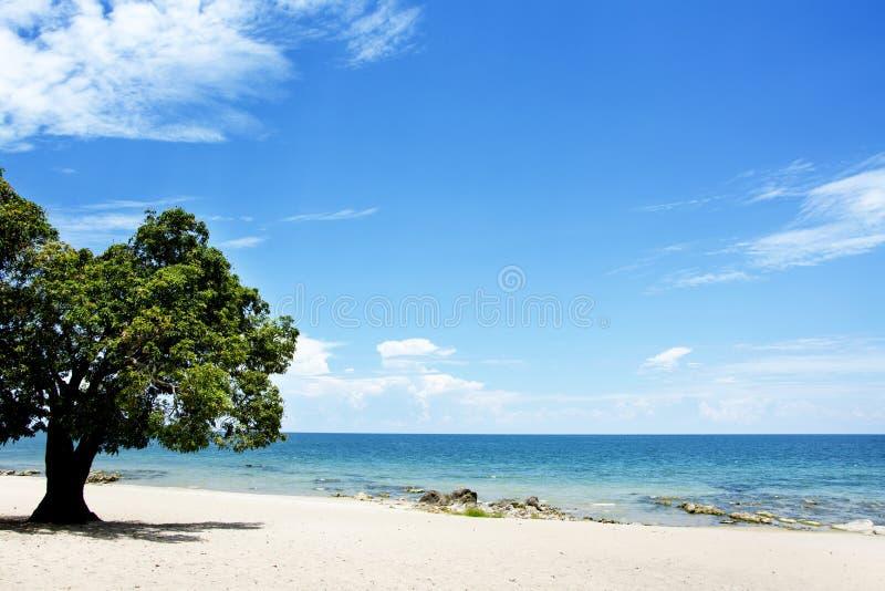 Mangowy drzewo na plaży na słonecznym dniu, Chintheche plaża, Jeziorny Malawi obraz stock