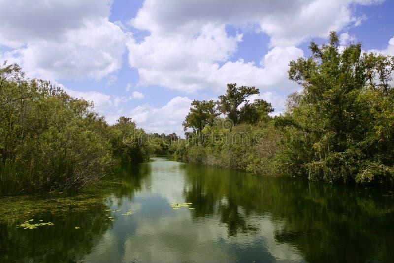 Mangroove Fluss in den Sumpfgebieten Florida lizenzfreie stockbilder