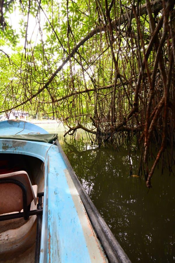 Mangroovy小船骑马 Madu ganga沼泽地 Balapitiya 斯里南卡 库存图片