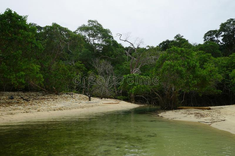 Mangrovar i en gul sandstrand av den Mogo Mogo ön, Panama royaltyfria foton
