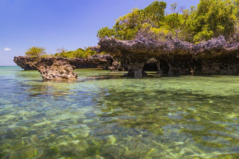 Mangrovar i havlagun Kwale ö zanzibar royaltyfri bild