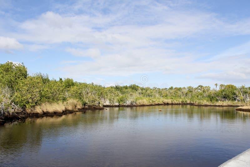 Mangrovar på Everglades arkivfoton