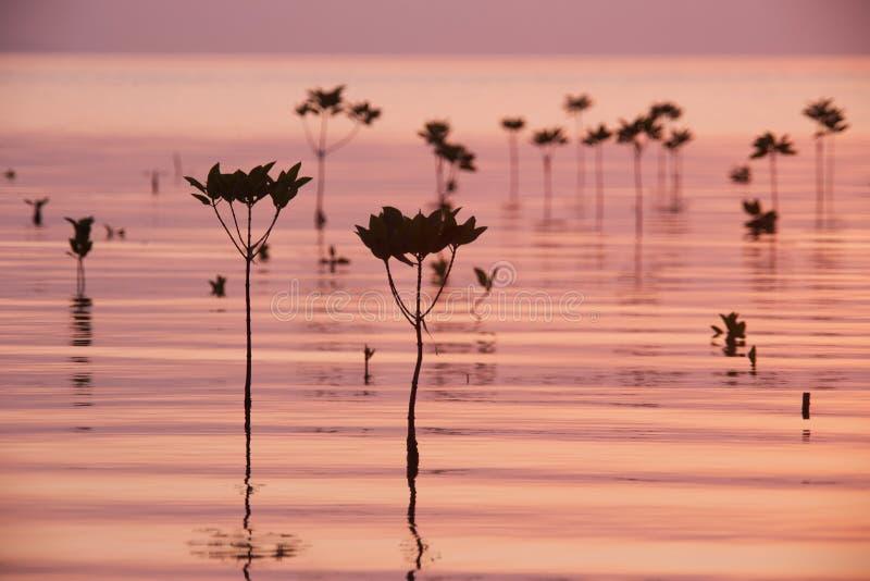mangrove royaltyfri bild