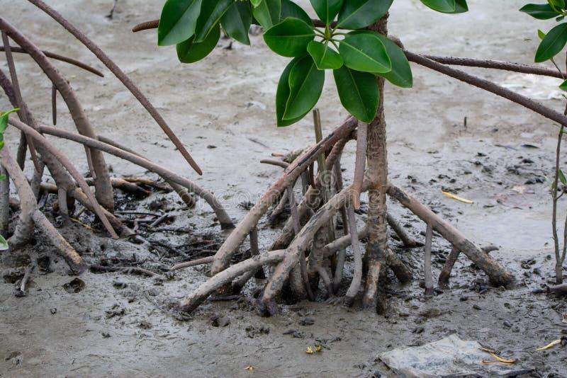 mangrove royalty-vrije stock afbeelding