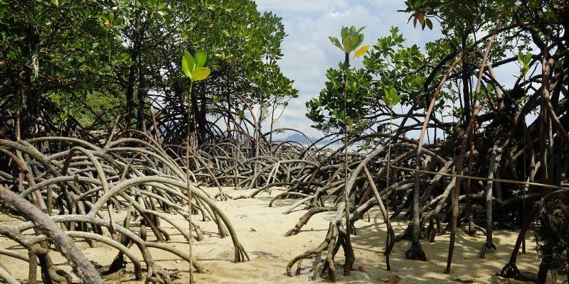mangrove royalty-vrije stock foto's