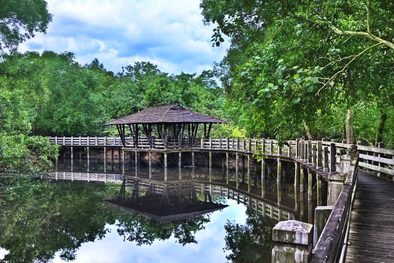 Mangrove Arboretum Shelter, Sungei Buloh Singapore stock photo