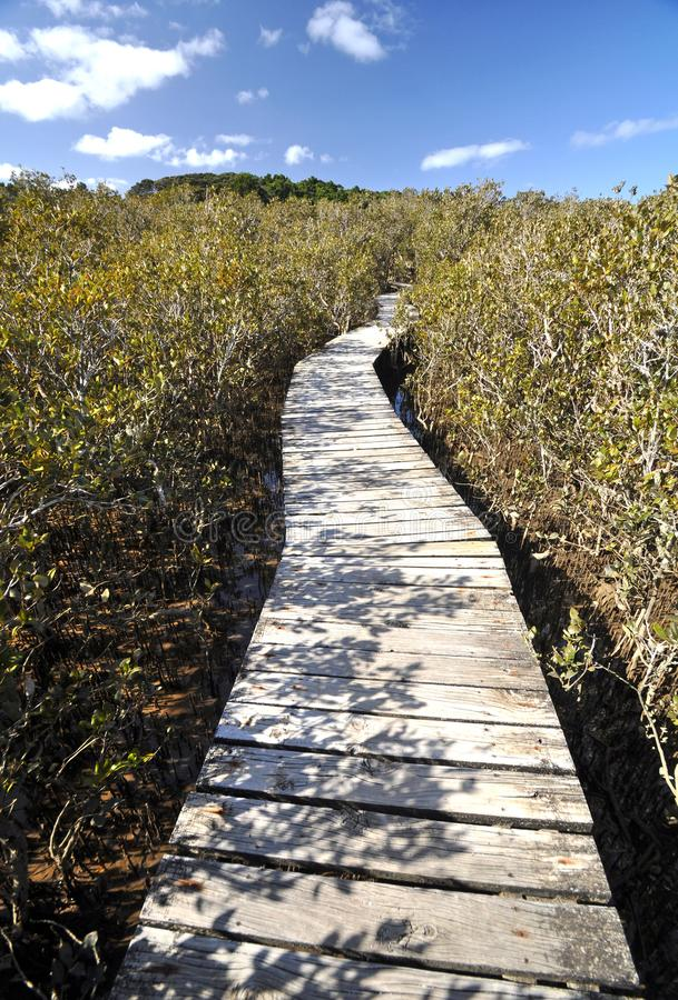 Mangrove boardwalk, Waitangi, New Zealand royalty free stock photography