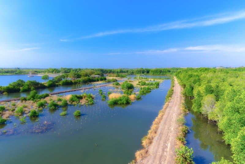 Mangrove bos en duidelijk water stock fotografie