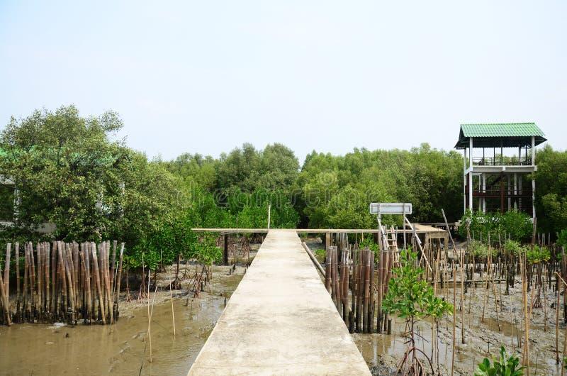 Mangrove bos of Intertidal bos in Bangkhunthein in Bangkok Thailand royalty-vrije stock fotografie