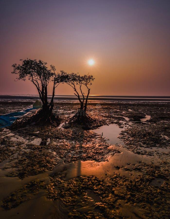 Mangrove bosstrand royalty-vrije stock afbeeldingen