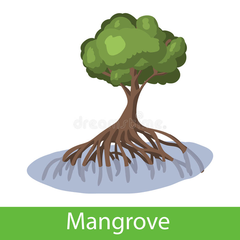 Mangrove cartoon tree stock illustration
