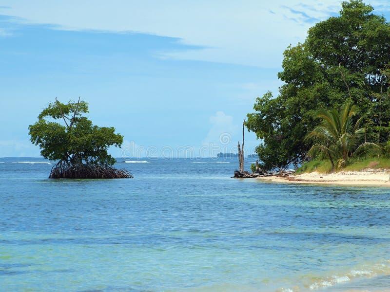 Mangrove en strand stock afbeelding