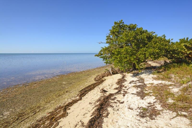 Mangrove en Strand bij hoogtijd royalty-vrije stock foto's