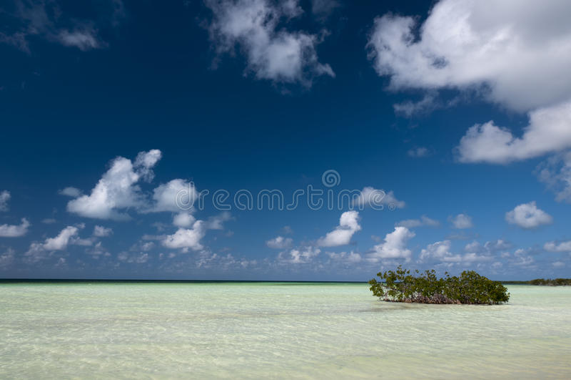 Mangrove fields near Cayo Blanco, Cuba royalty free stock image