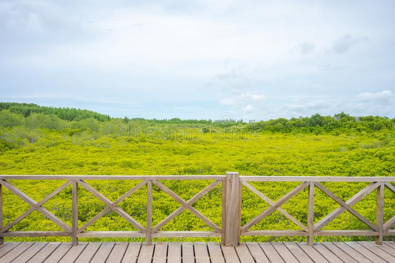 Mangrove forest Ceriops decandra Also known as the Golden Meadow Prong destinations of Rayong, Thailand is a natural shoreline. Mangrove forest Ceriops decandra stock photos