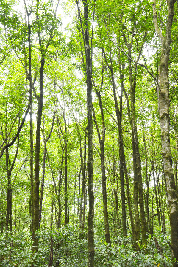 Download Mangrove Forest Conservation Stock Photo - Image: 38215614