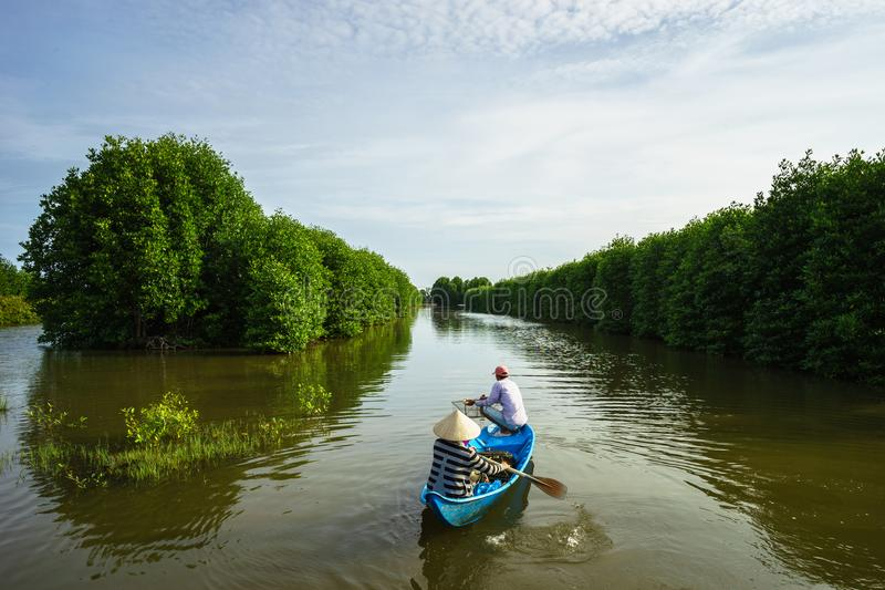 Mangrove forest with fishing boat in Ca Mau province, Mekong delta, south of Vietnam royalty free stock image