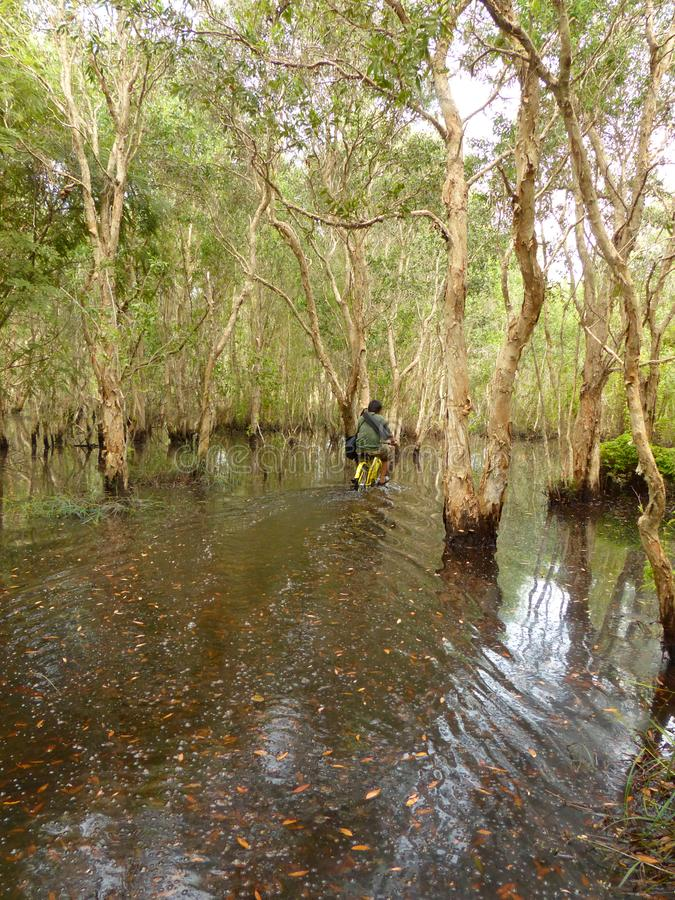 Mangrove forest and Men Cycling bike stock fotografie